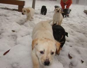 Pups in the snow