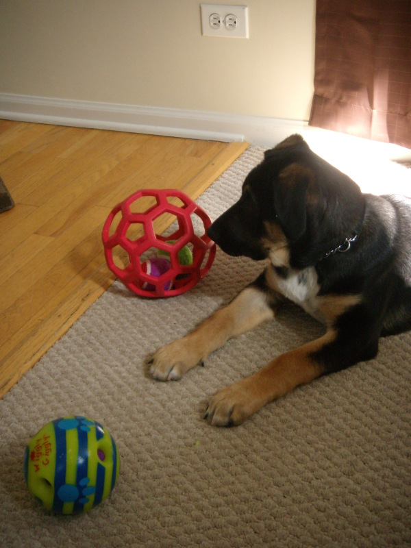 Bauer and his toys