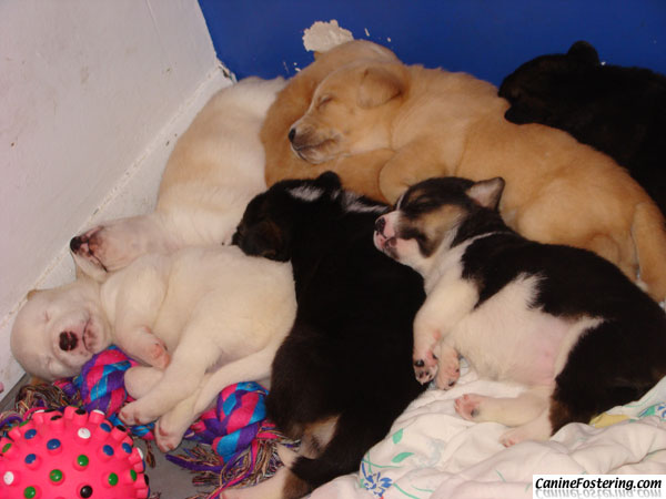 the pups on May 20, 2009