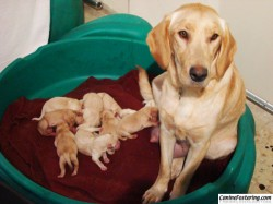 New mama Angel and her 9 pups