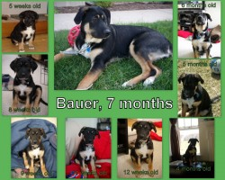Bauer collage