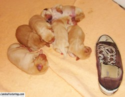 pups and shoe