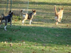 Poppy, Jackson and Koda on the run
