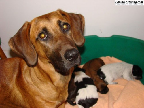 Greta and her pups