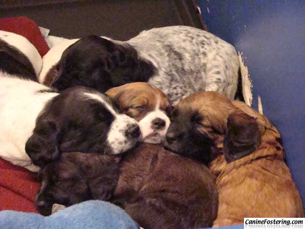 puppies sleeping in a pile