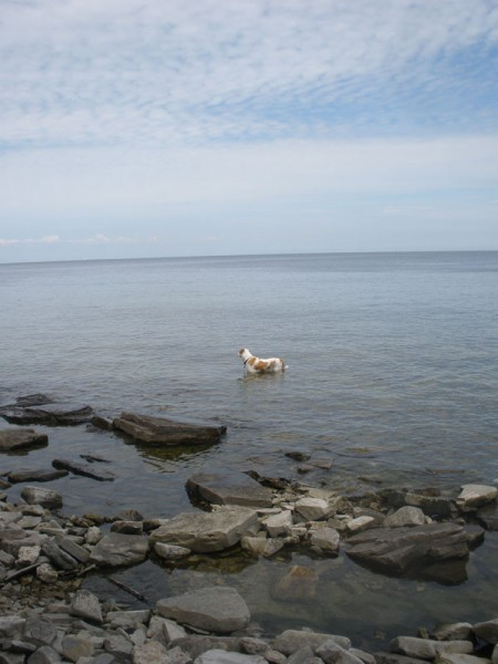 Indy the dog, standing in a bay in Door County, WI